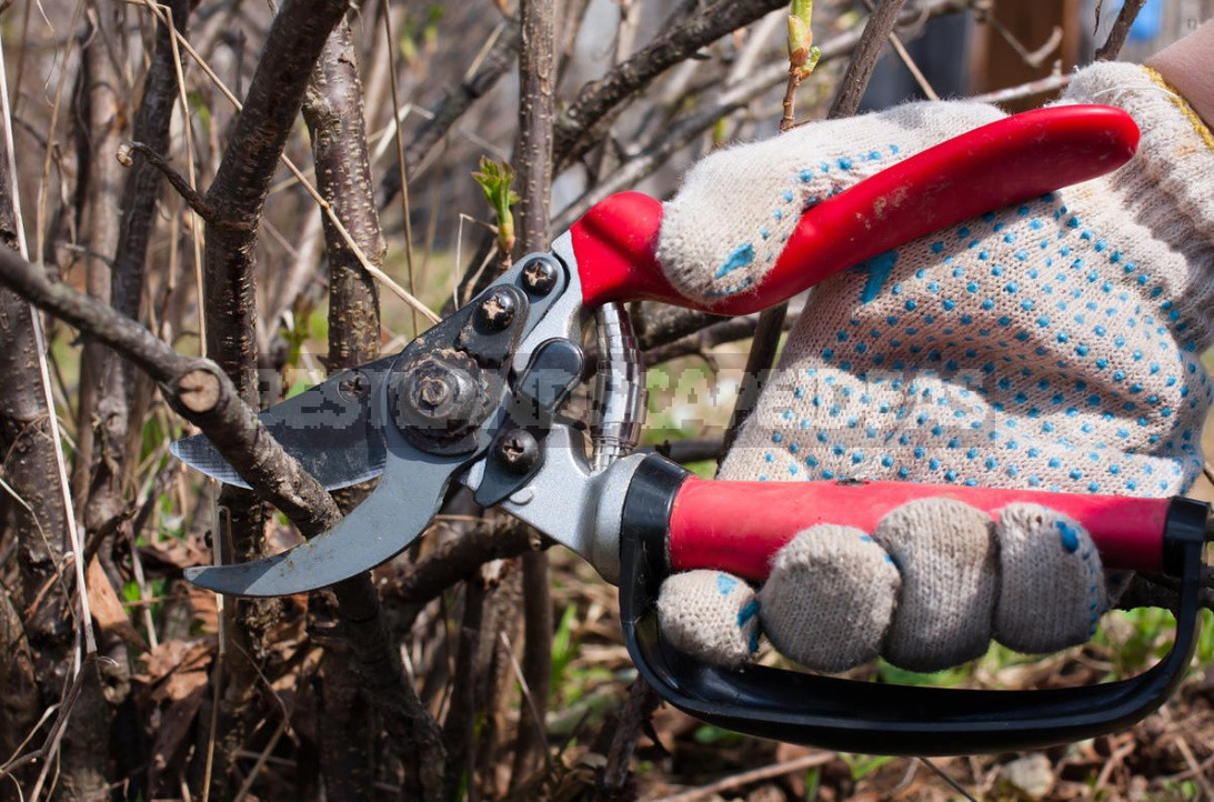 Pruning In The Orchard: Which Branches Should Be Removed Immediately (Part 2)