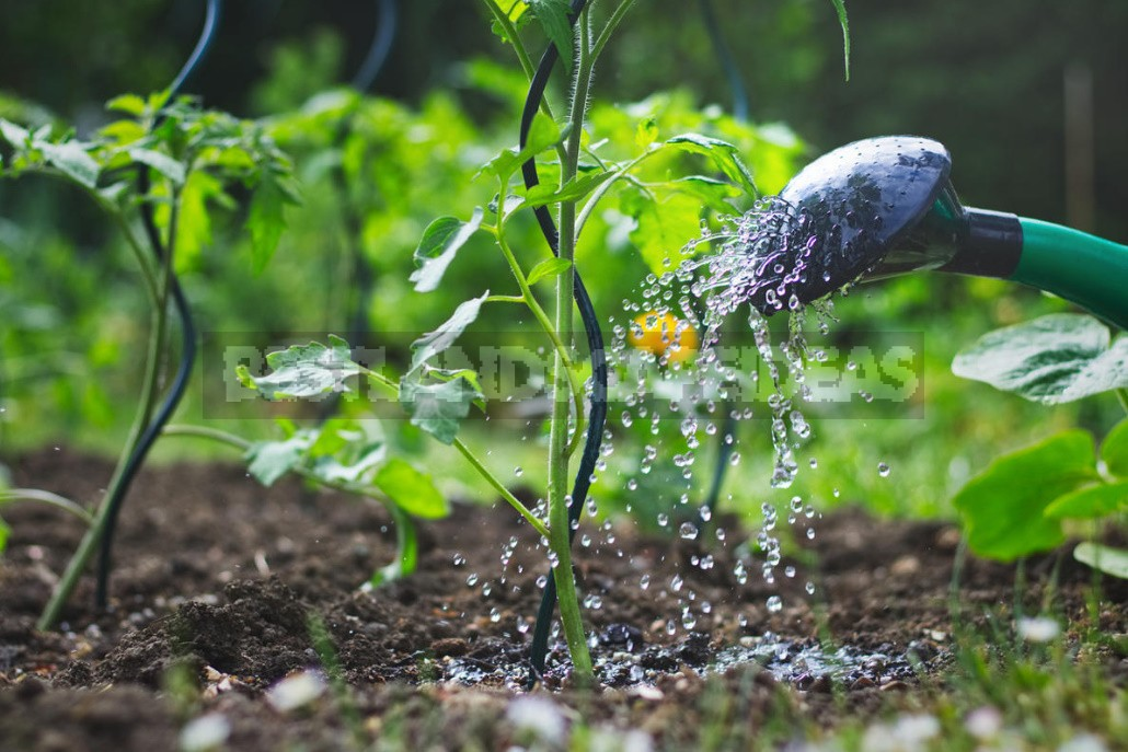 Don't Be Afraid Of Bacteria! Which Of Them Are Useful For Your Garden