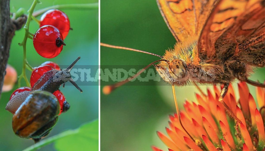 Garden Macro Photography: Tips For Macro Photography Of Flowers And Insects