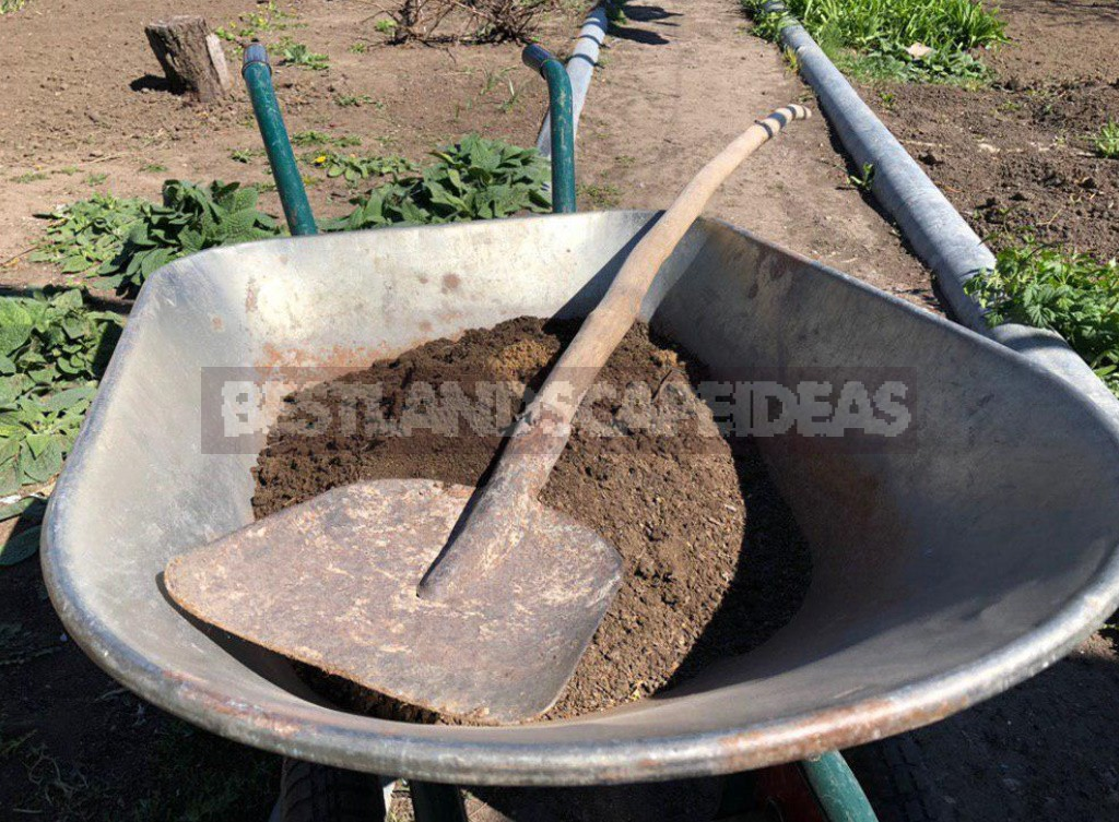 When And How To Sow Cucumbers In The Open Ground