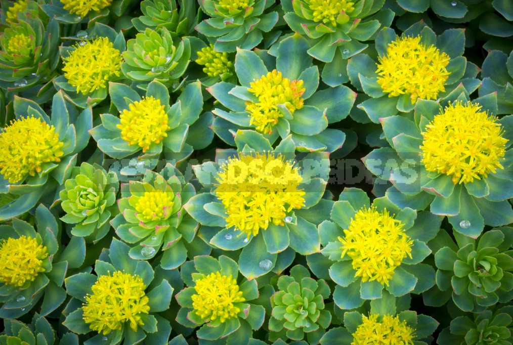 Decorative Garden: Plants In Yellow And Orange Colors (Part 1)