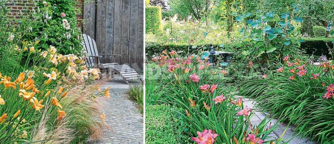 Hemerocallis In Flower Beds: Varieties, Partners, Care