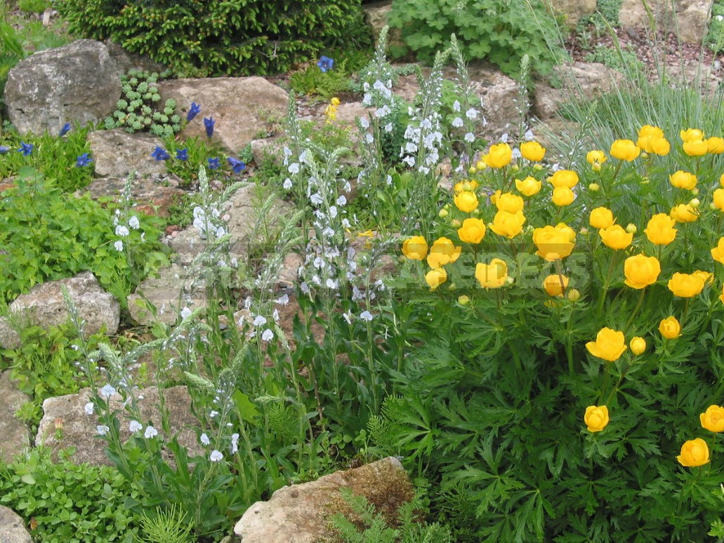 Man-Made Meadows: How To Create a Meadow Flower Garden From Perennials (Part 2)