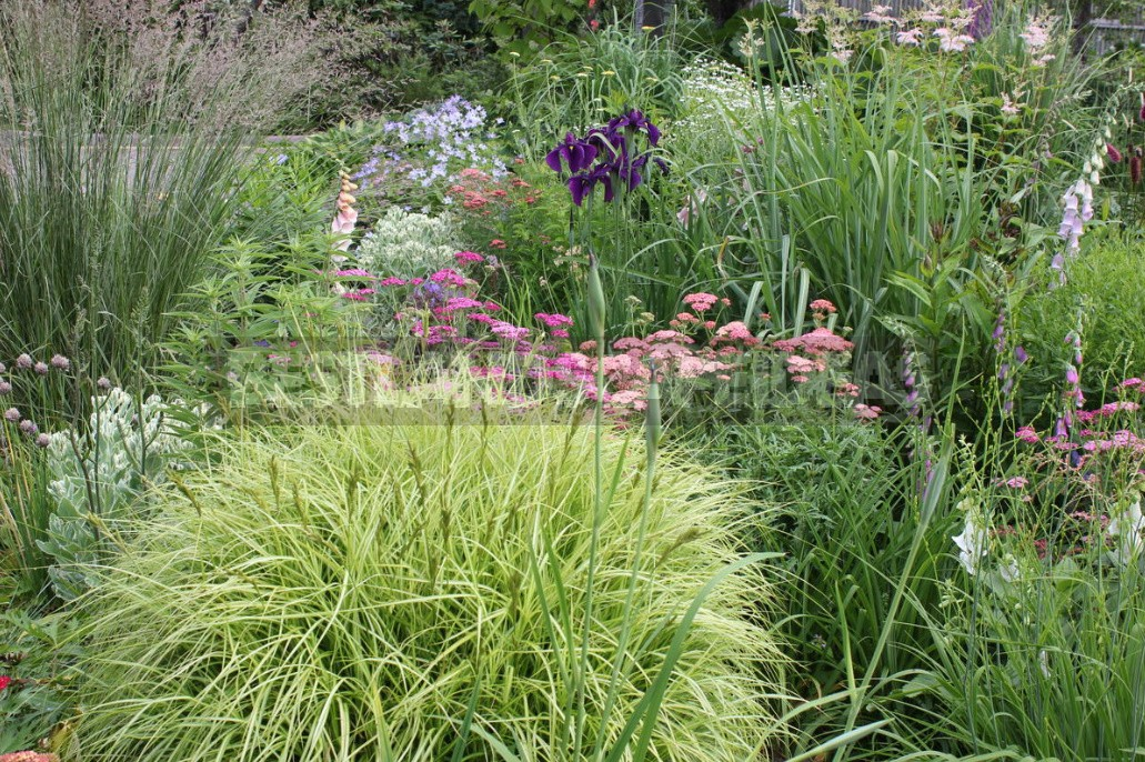 Man-Made Meadows: How To Create a Meadow Flower Garden From Perennials (Part 1)