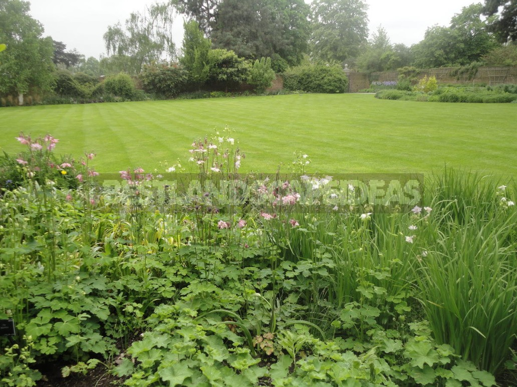 Mow Or Not Mow The Lawn