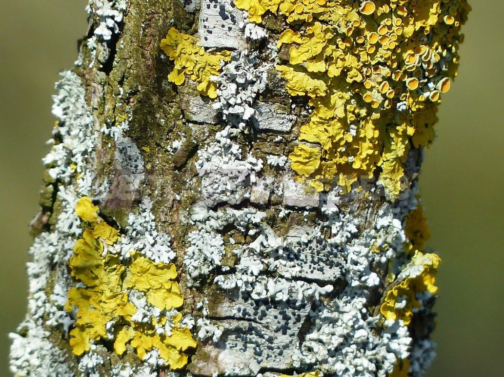 Polypores, Mosses, Lichens — Uninvited Guests Of The Garden (Part 1)