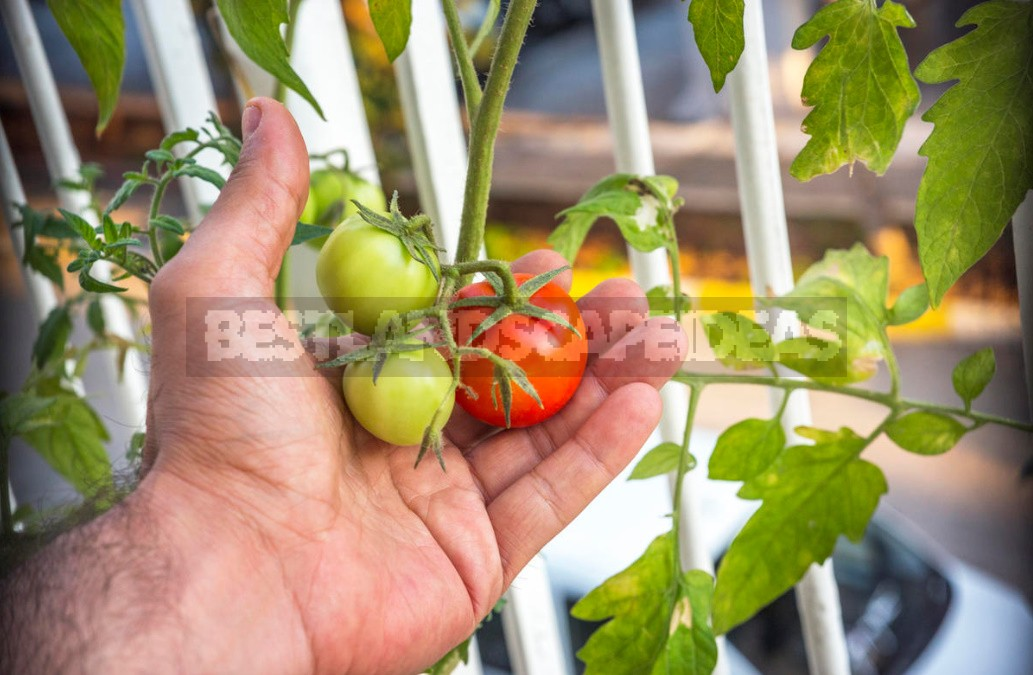 Reasons For Poor Harvest: What Factors Can Affect The Number Of Fruits
