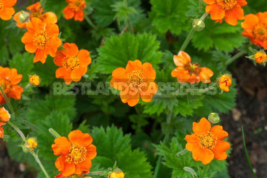 Sunny Shades In The Garden: Plants In Yellow And Orange (Part 1)