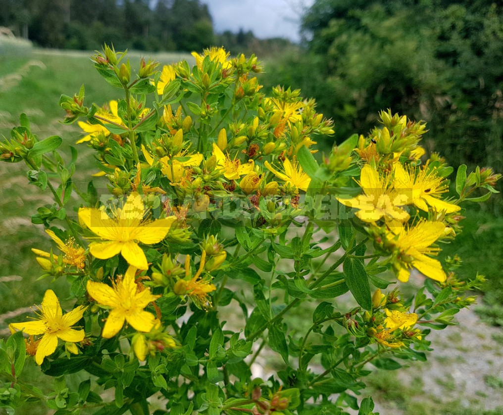 Sunny Shades In The Garden: Plants In Yellow And Orange (Part 2)
