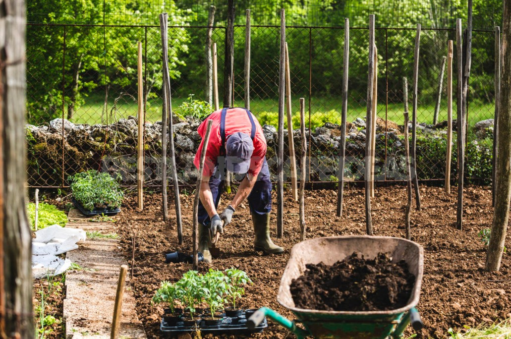 Fast Compost: Ways To Speed Up And Recipes For Cooking