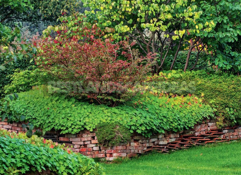Groundcover Plants For The Garden: In The Shade And In The Sun