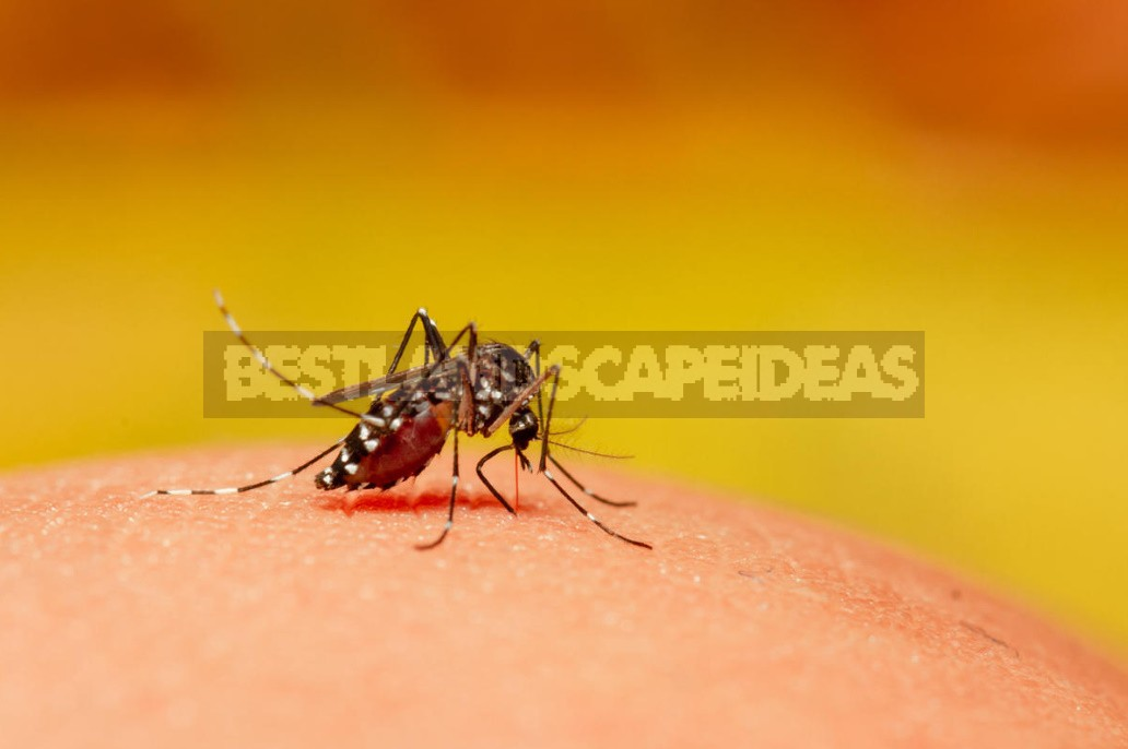 Insects That Spoil Our Life In The Country (Part 1)