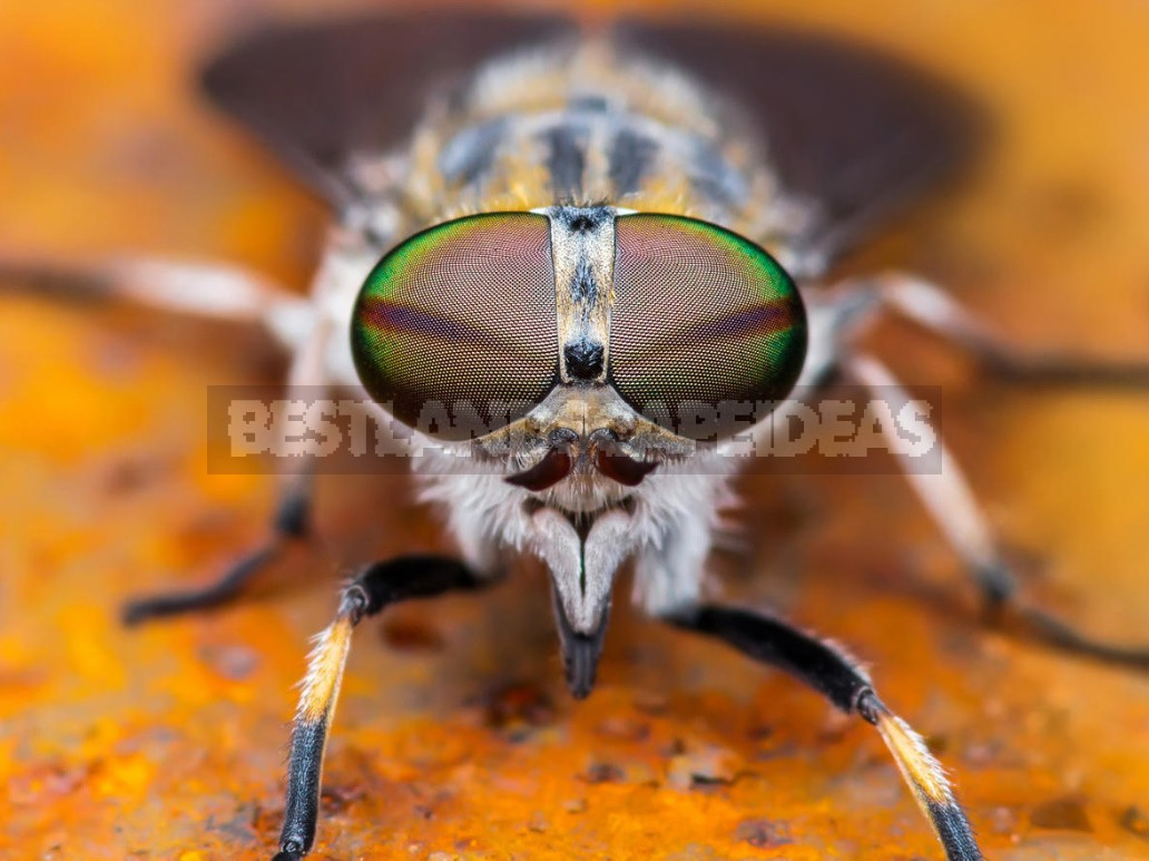 Insects That Spoil Our Life In The Country (Part 2)