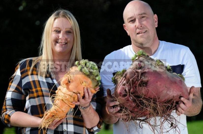 Giant Vegetables On Display In Harrogate (England)