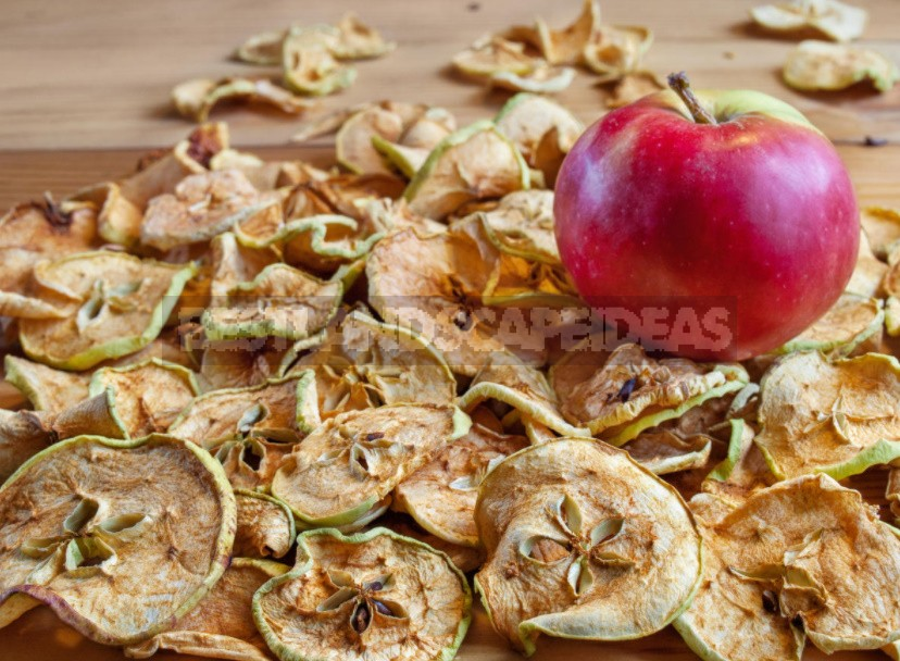 Preparations From Fallen Apples: Compote, Jam, Juice, Cider, Vinegar, Dried