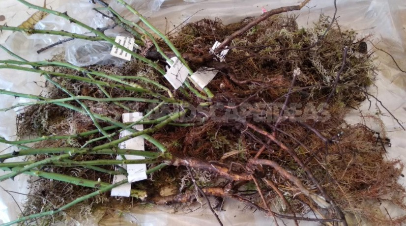 Sphagnum Moss: Properties And Use In The Garden