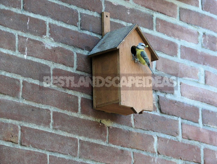 And The Table, And The House: Feeders, Drinkers And Houses For Birds