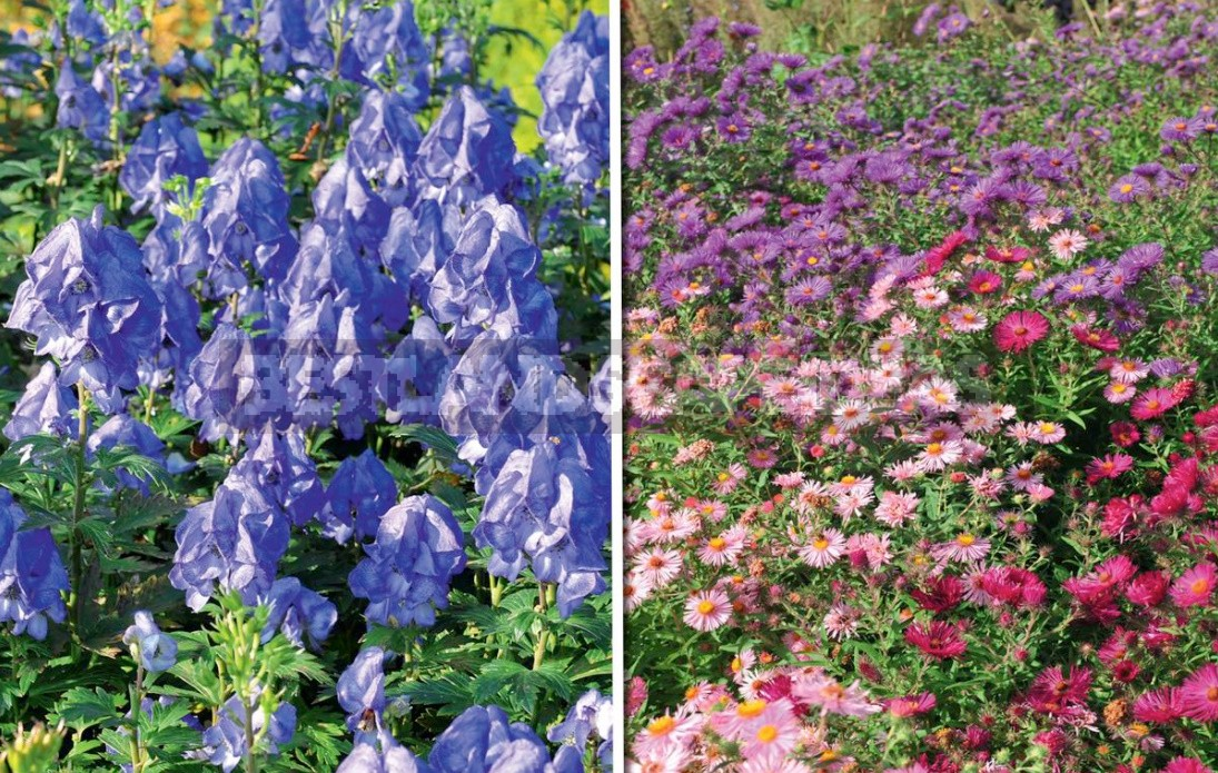 Autumn Perennials: An Overview Of Late Blooms