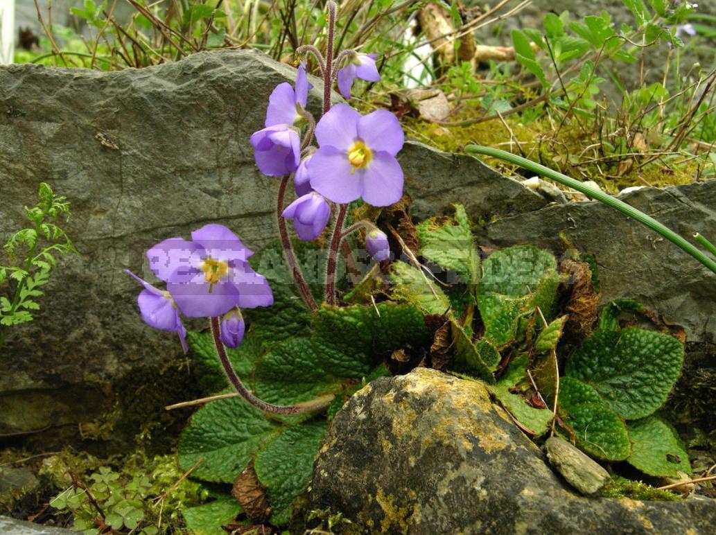 Belvedere, Vienna, April: Walk In The Rock Garden