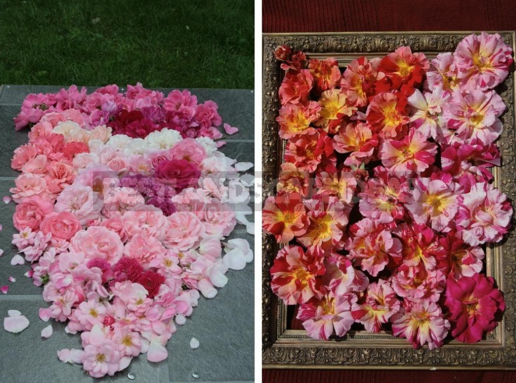 Combination Of Roses By Color: Choosing a Color Scheme For Garden Compositions (Part 1)