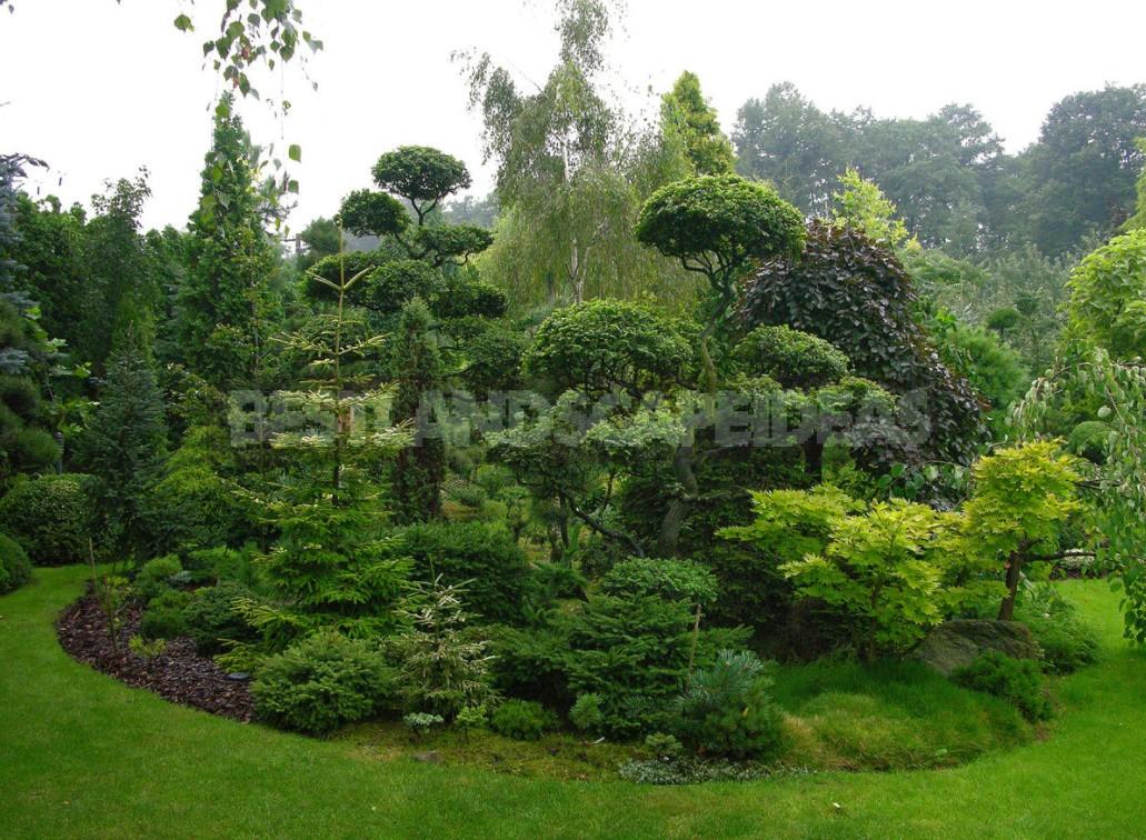 Shrub Garden: Plant Selection Criteria (Part 1)