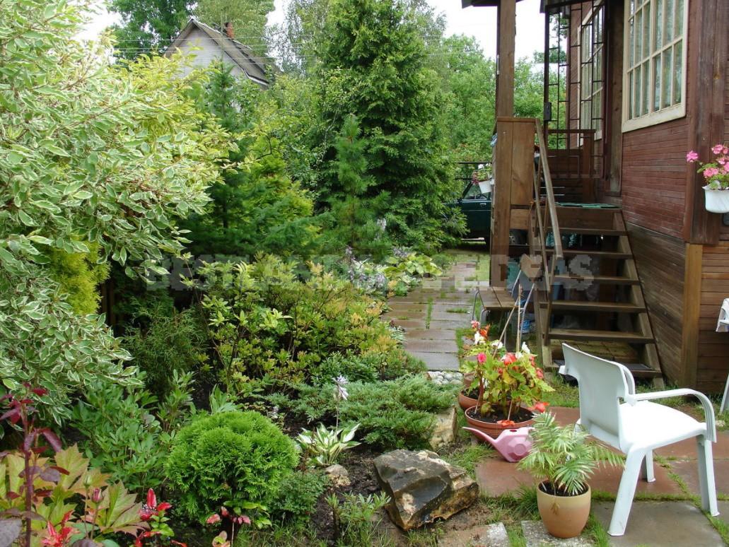 Shrub Garden: Plant Selection Criteria (Part 2)