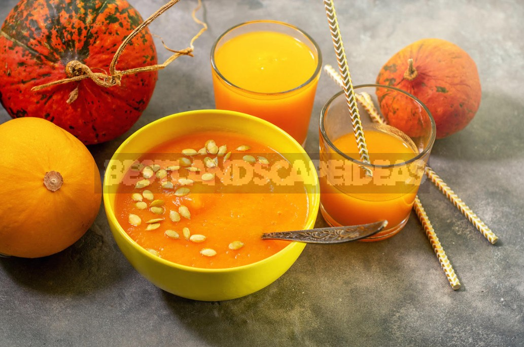 Useful Properties Of Pumpkin And Its Closest Relatives