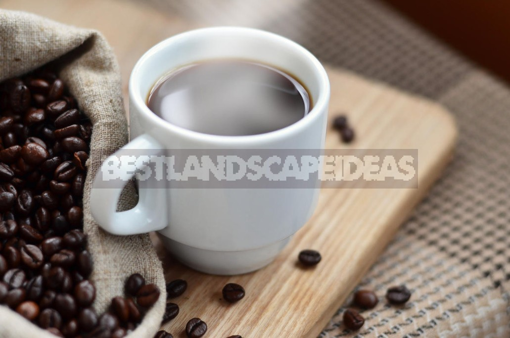 Benefits And Harms Of Coffee: Facts And Myths About The Ancient Drink (Part 2)