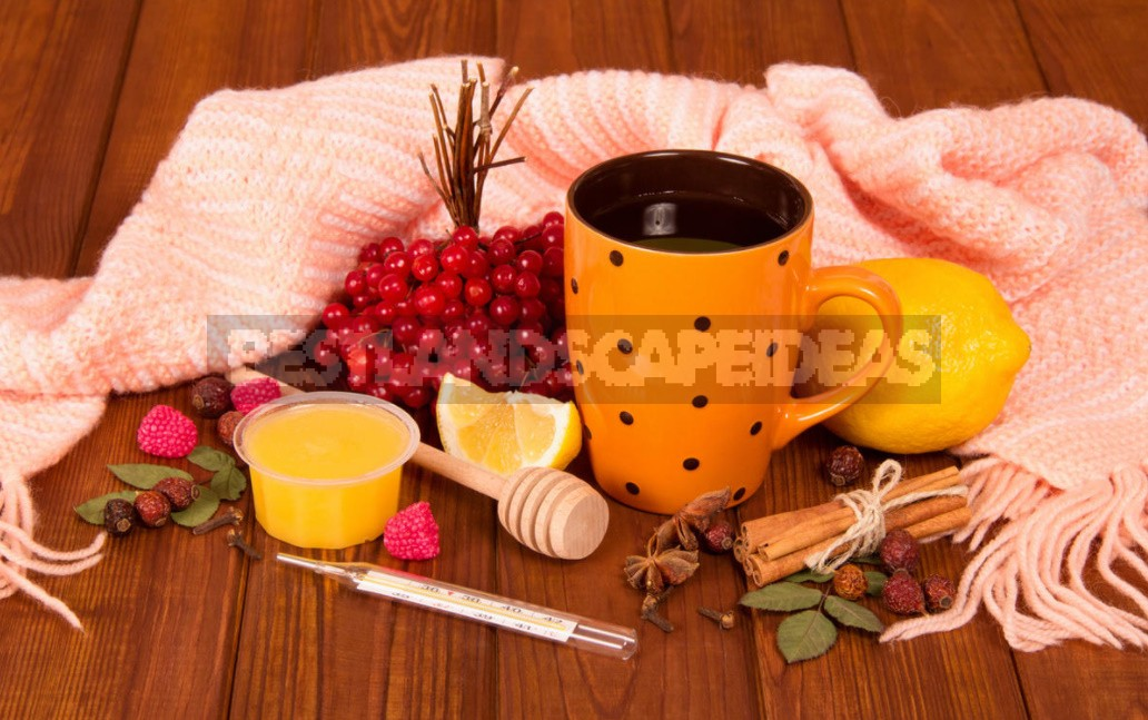 Cold Remedies That Are Available In Every Home