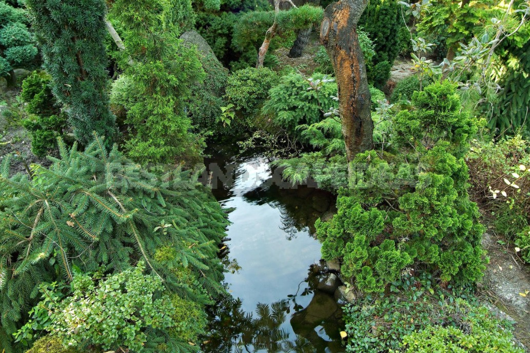 Compositions With Conifers And Their Companions In The Garden