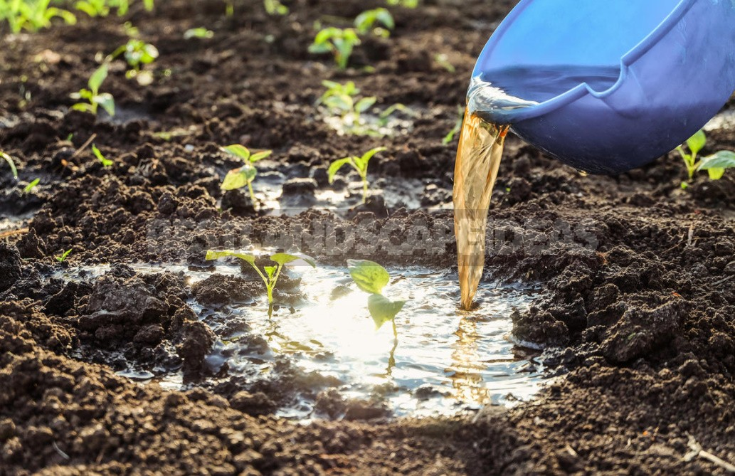 Natural Remedies That Help Restore Soil Health