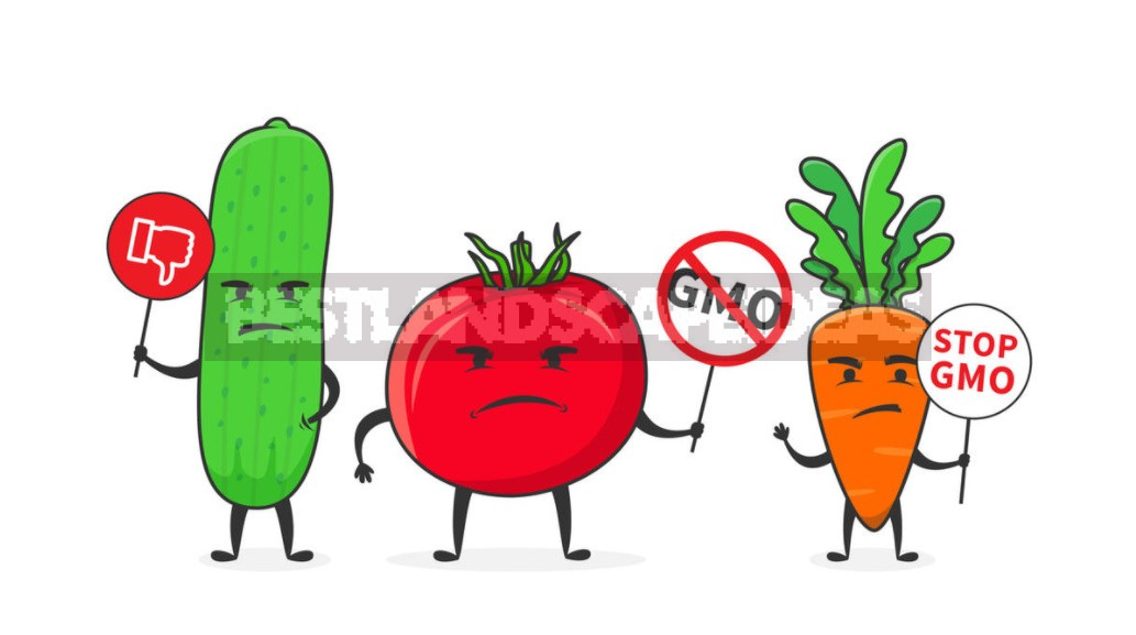 Once Again About GMOs