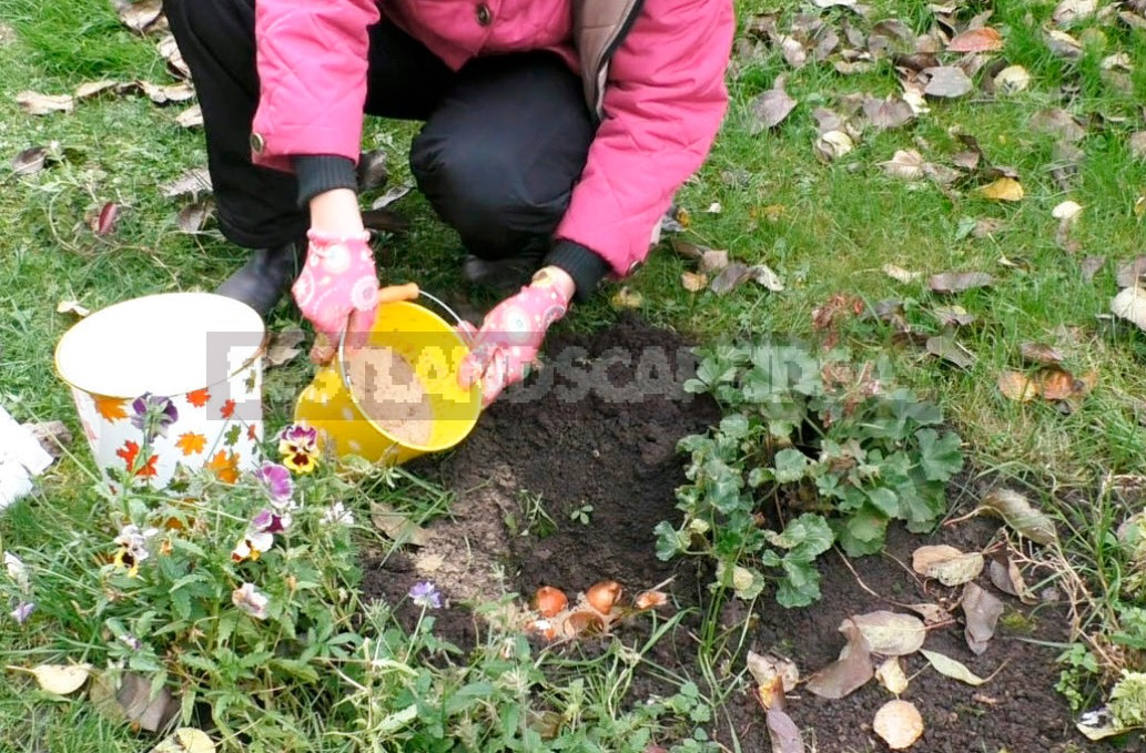 Planting Bulbs In Autumn: November - It's Not Too Late!