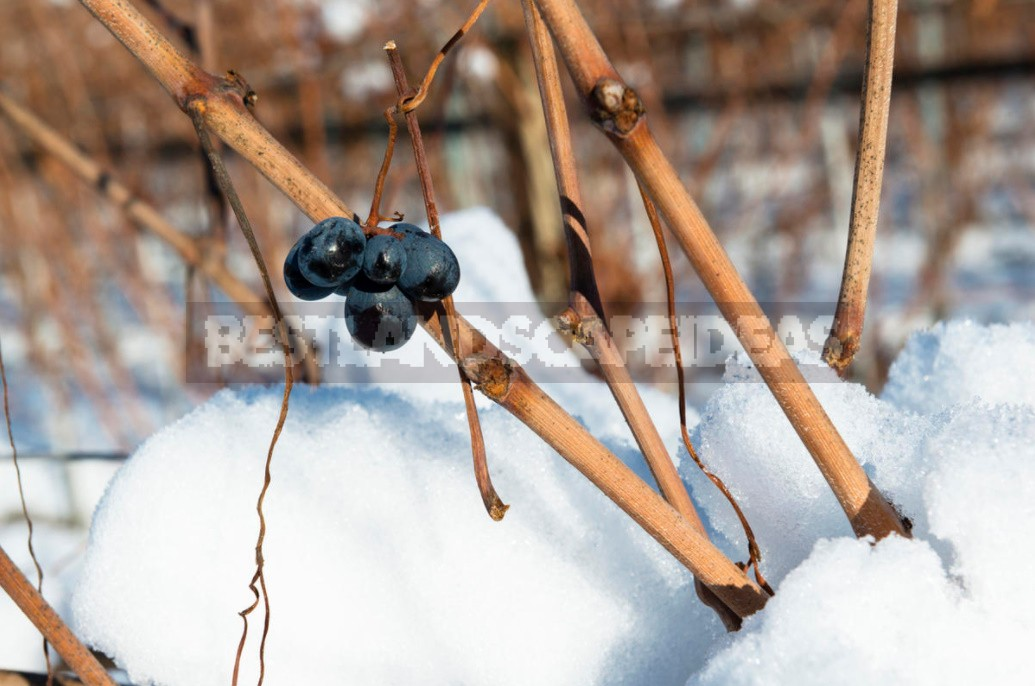 Shelter Plants For The Winter: What Crops To Cover (Part 1)