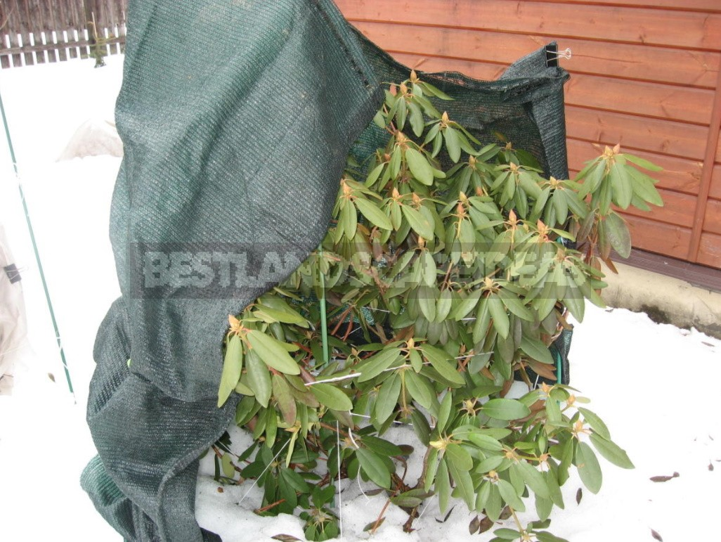 Shelter Plants For The Winter: What Crops To Cover (Part 2)