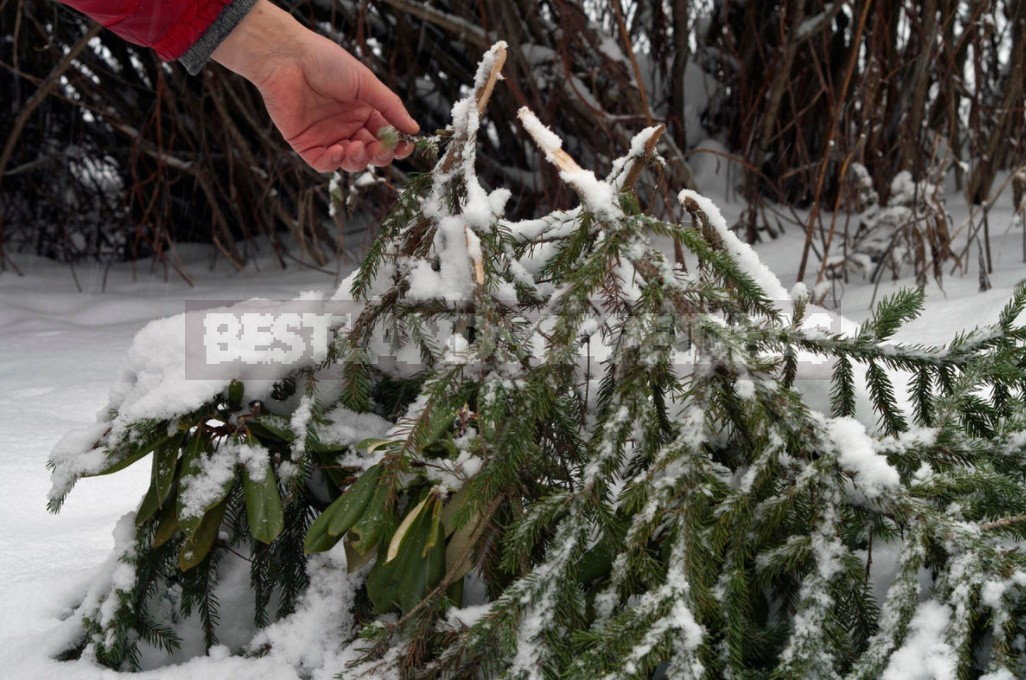 To Survive Under Cover: Three Mistakes That Can Destroy Plants