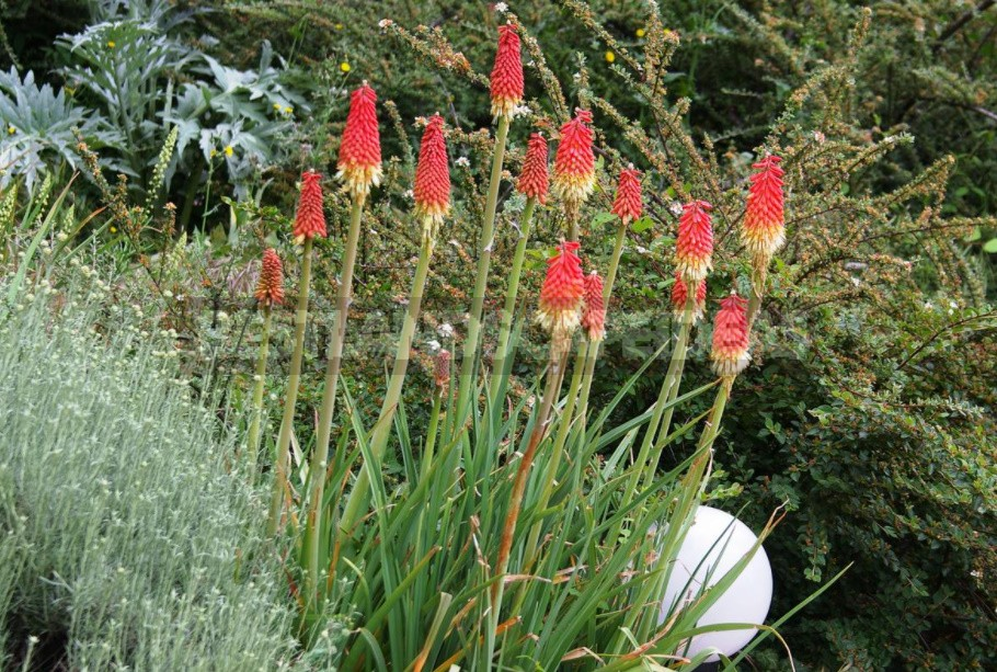 Unpretentious Perennials For Flower Beds In The Sun And In The Shade