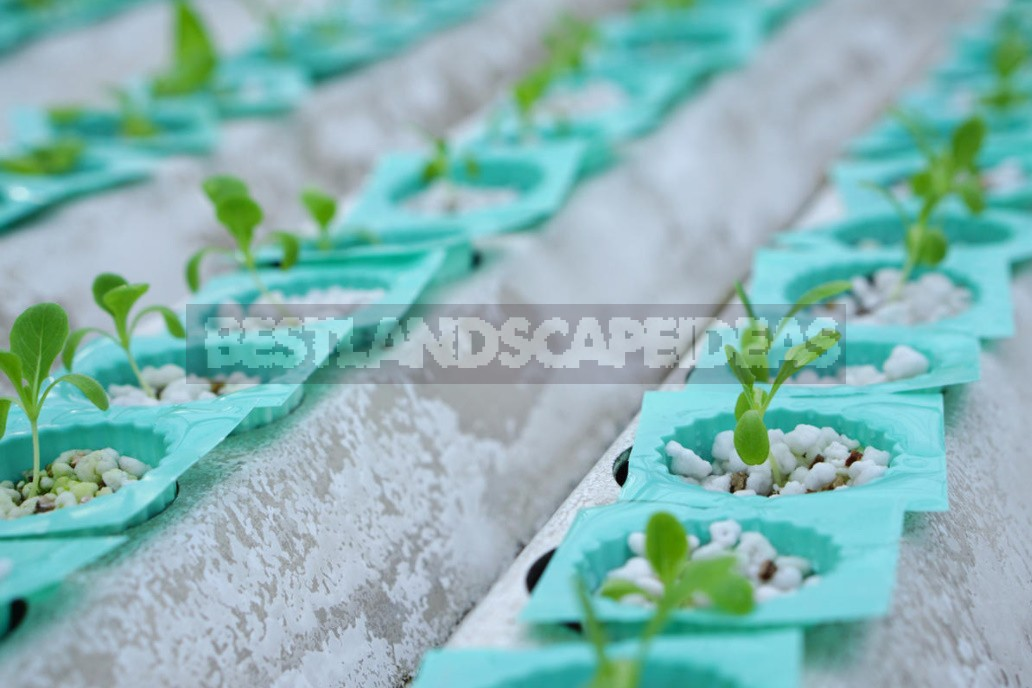 What Is Perlite And How To Use It Correctly In Gardening