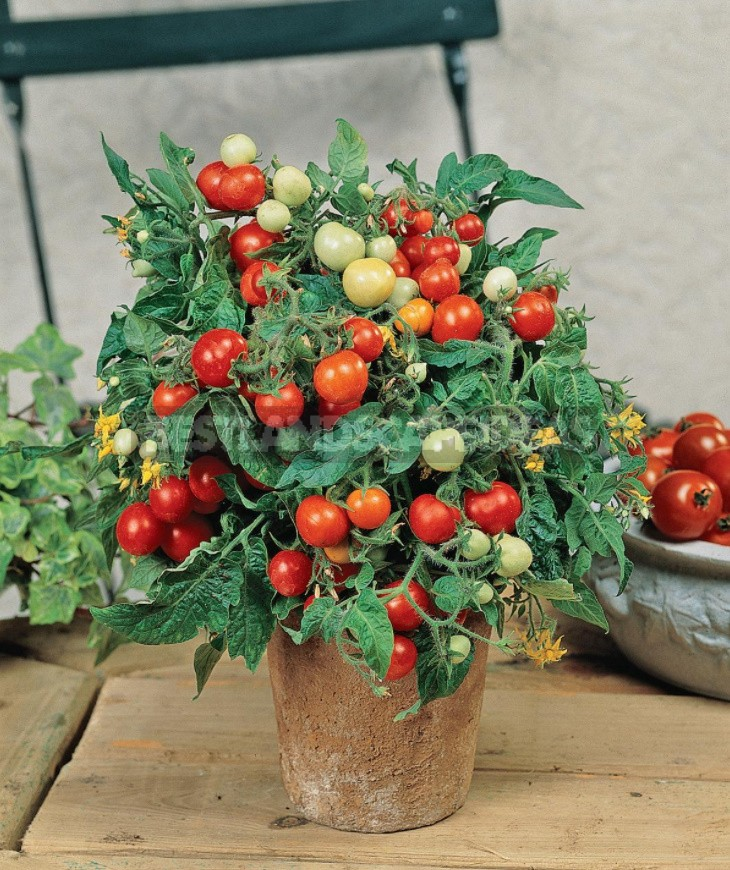 What Vegetables Can Be Grown On The Windowsill