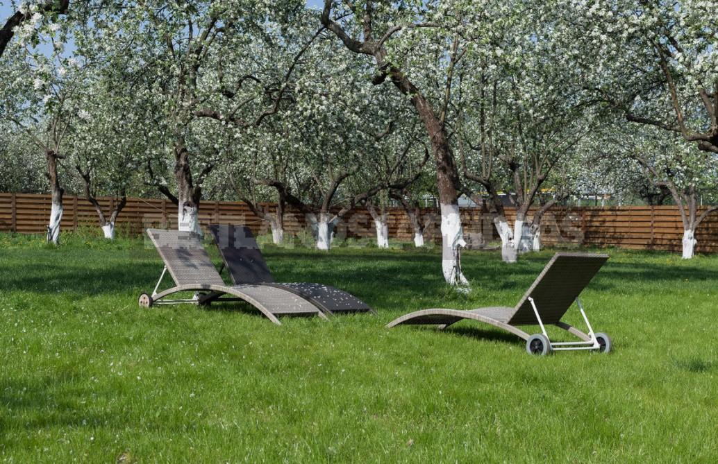 Apple Tree Trunk Circle: Design Options