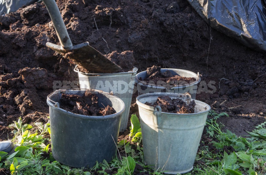 How To Apply Manure And Manure So As Not To Harm Plants
