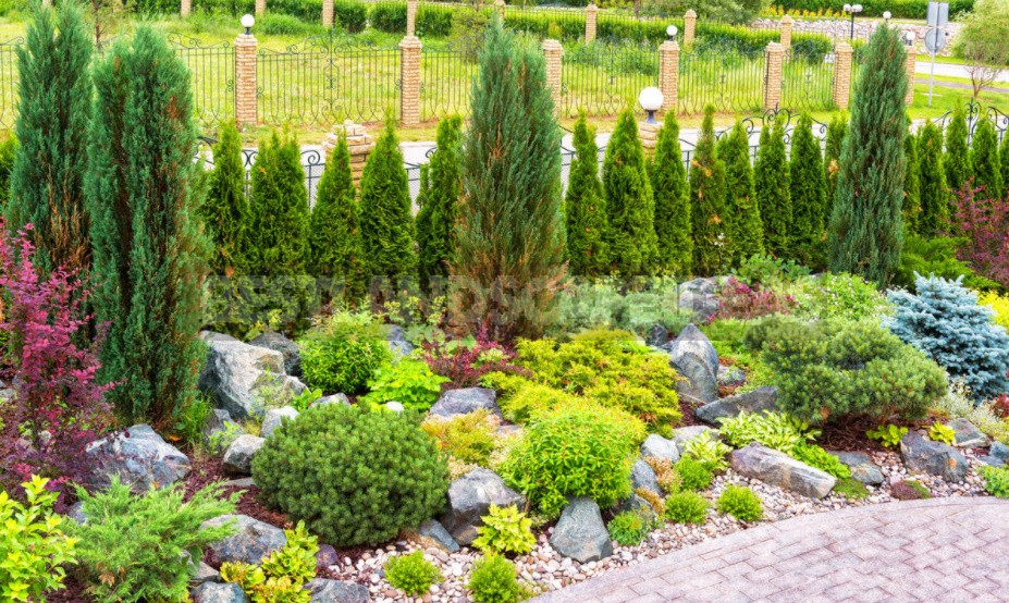 Coniferous Plants In The Garden: Height Groups And Their Use