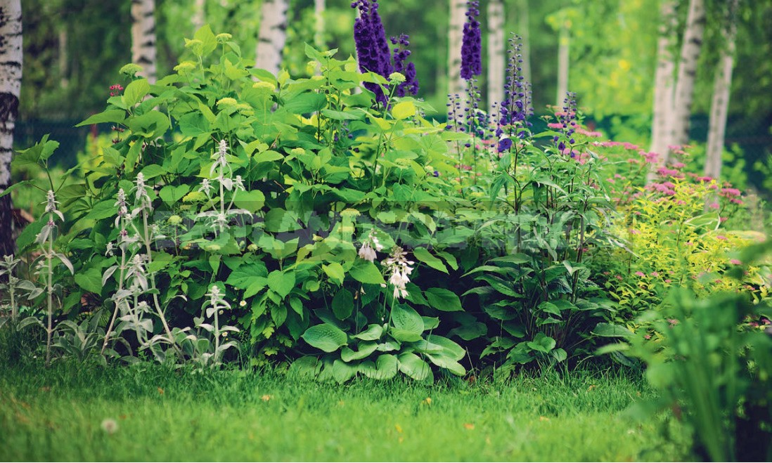 Dacha In The Forest: Selection Of Plants, Paths, Places Of Rest