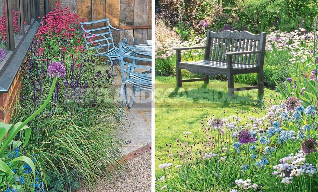 Flower Beds Of Perennials: Examples, Planting Scheme