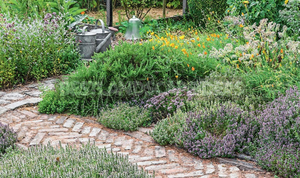 A Few Simple Rules Of The Eco-Garden. How To Make a Plot Eco-Friendly