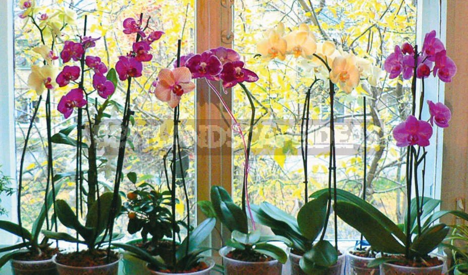 How To Resuscitate An Orchid