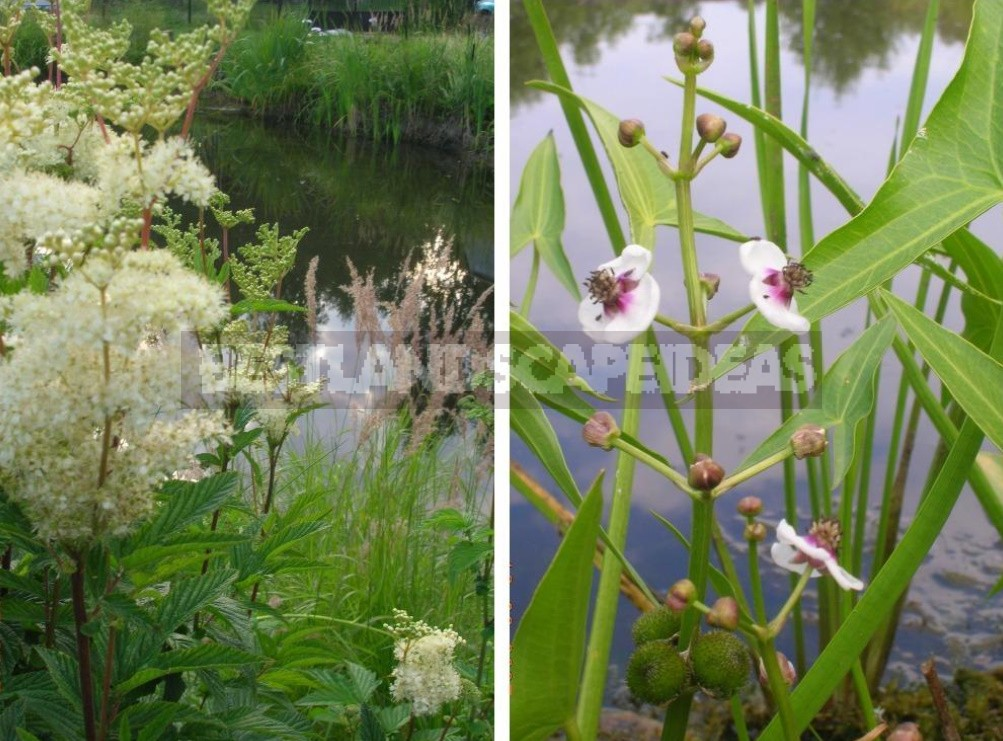 Natural Pond In The Country: Troubles And Joys (Part 2)