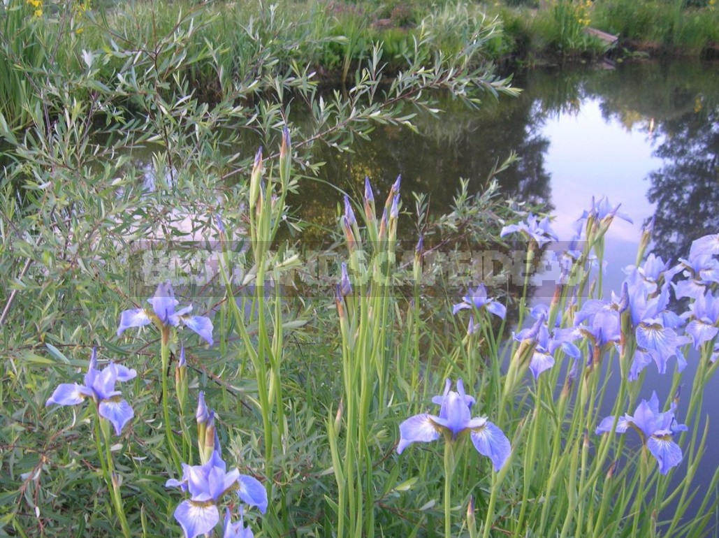 Natural Pond In The Country: Troubles And Joys (Part 1)