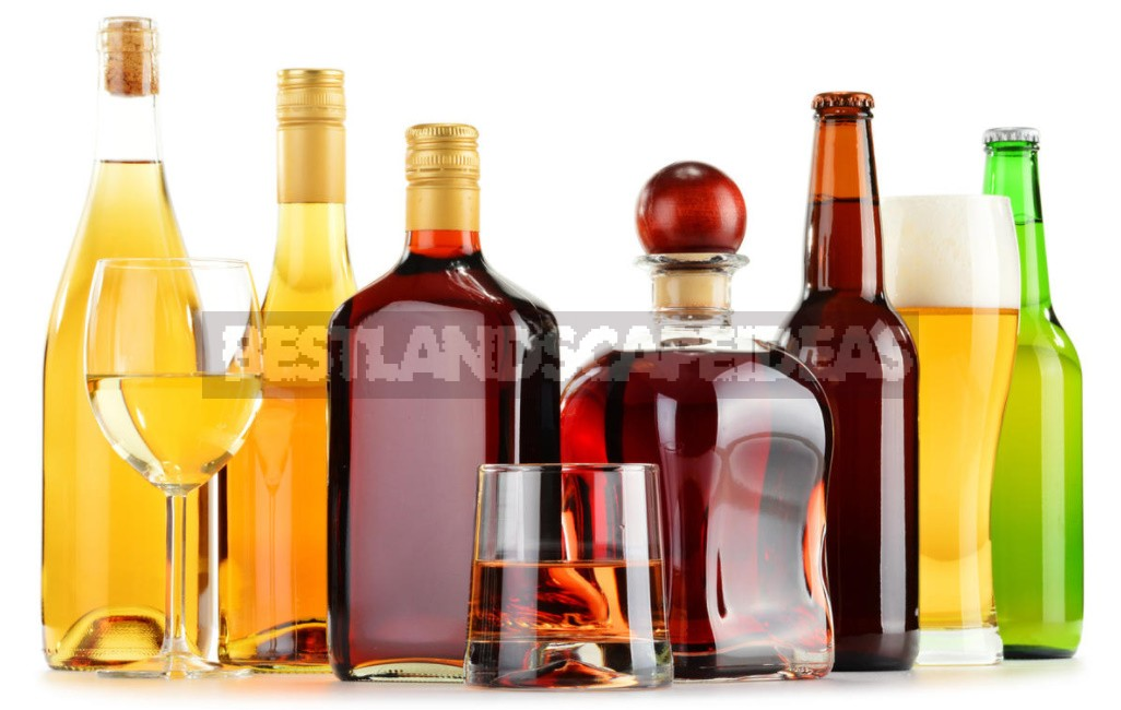 New Year's Eve Feast: How To Drink And What To Eat To Get Less Drunk (Part 1)