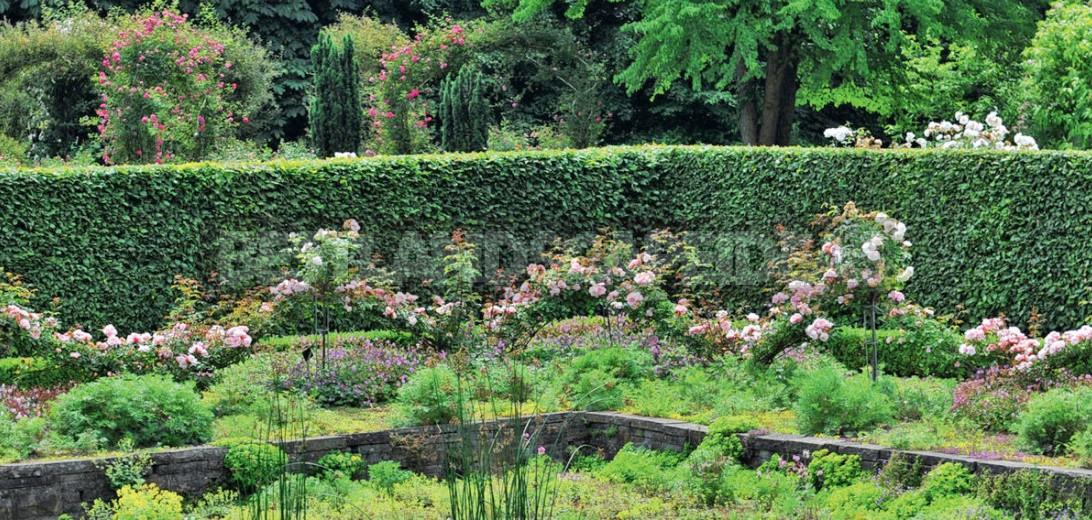 Ten Ideas For a Chic Rose Garden